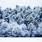 Snow Covered Forest by Marc Garrido Clotet