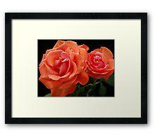 Double Rose Framed Print