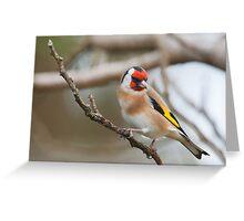 Goldfinch, County Kilkenny, Ireland Greeting Card