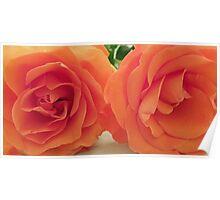 Roses-close crop Poster