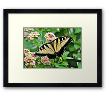 Tiger Swallowtail Butterfly On Pink Lantana Framed Print