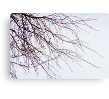 Tree Branch Nature Abstract Metal Print