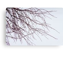 Tree Branch Nature Abstract Canvas Print