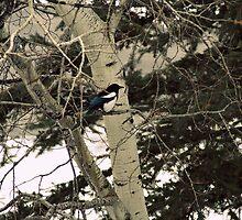 pretty magpie  by Trina King