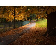 Autumn Leaves Photographic Print
