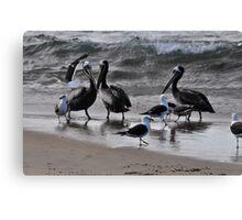 birds at sea shore Canvas Print