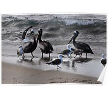 birds at sea shore Poster