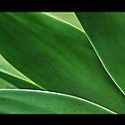Agave Leaves 2 by Tess Buckler