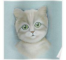 Cute cat portrait. Poster