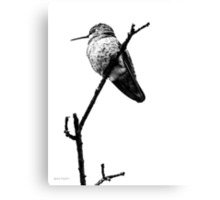 Another Little Bird (image & poetry) Canvas Print