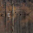 Egret's reflection by vasu