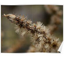 Dry flower  Poster