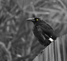 Bird on a Fence by nixworries