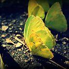 Yellow Beauties by Jamie McCall