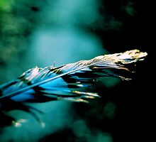 Blue feather by Jamie McCall