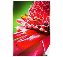 Tropical Gardens 5 - Ginger Torch Lily Poster