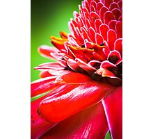 Tropical Gardens 5 - Ginger Torch Lily Photographic Print