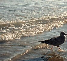 Gull Running In the Surf At Sunset by Jane Neill-Hancock