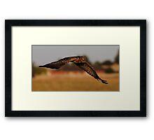 """""""Bird of Prey in Suburbia"""" Framed Print"""