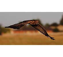 """Bird of Prey in Suburbia"" Photographic Print"