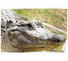 Gator Close Poster