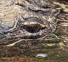 Gator Eye by Jeff Ore