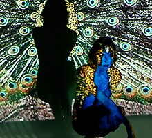 Peacock Projection Art by Tina Logan