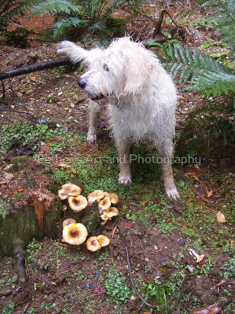 Fungi... Where? by Esther's Art and Photography