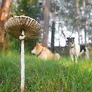 Mushroom Morning by George Petrovsky