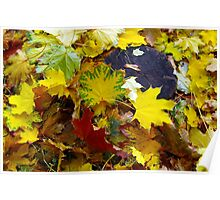 Top view of fallen autumn maple leaves Poster