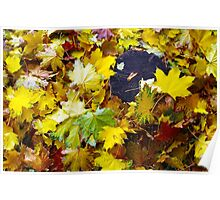 Overhead view on the fallen red, yellow and green maple leaves Poster