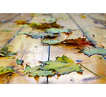 Selective focus on autumn maple leaves with shallow depth of field Photographic Print