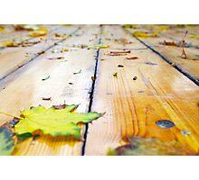 Selective focus on fallen autumn maple leaves closeup Photographic Print
