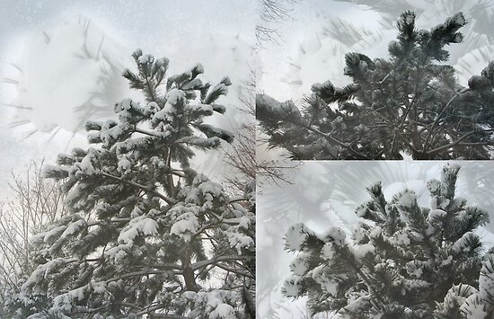 Snow on pines - collage by steppeland