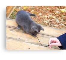 Homeless kitten playing with a stick Canvas Print