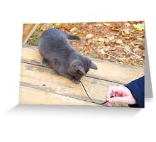 Homeless kitten playing with a stick Greeting Card