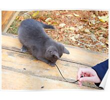 Homeless kitten playing with a stick Poster