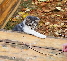 Small kitten playing in the autumn park by vladromensky