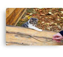 Small kitten playing in the autumn park Canvas Print