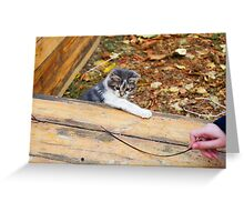 Small kitten playing in the autumn park Greeting Card