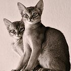 Abyssinian Kittens by Ari Salmela