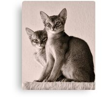 Abyssinian Kittens Canvas Print