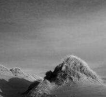 dune, forvie sands by codaimages