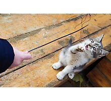 Small cute kitten playing with a twig in the street Photographic Print