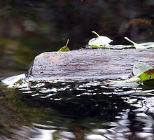 Sunken Log and Leaves by Chris Gudger