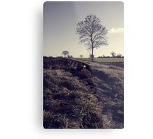 Norfolk Farming Metal Print