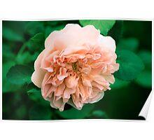 Grandmother's Garden 24 Poster