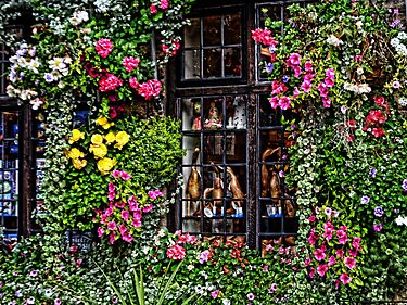 Floral Framed Window At Wells Somerset by lynn carter