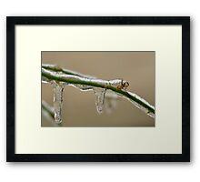 Freezing rain Framed Print