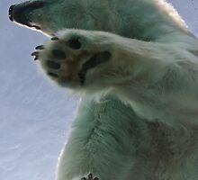Polar Bear at Detroit Zoo by Tina Logan